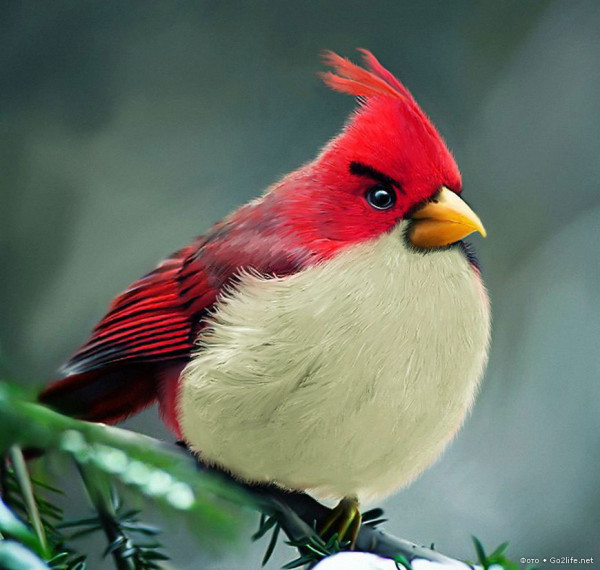 Ажиотаж вокруг Angry Birds Go
